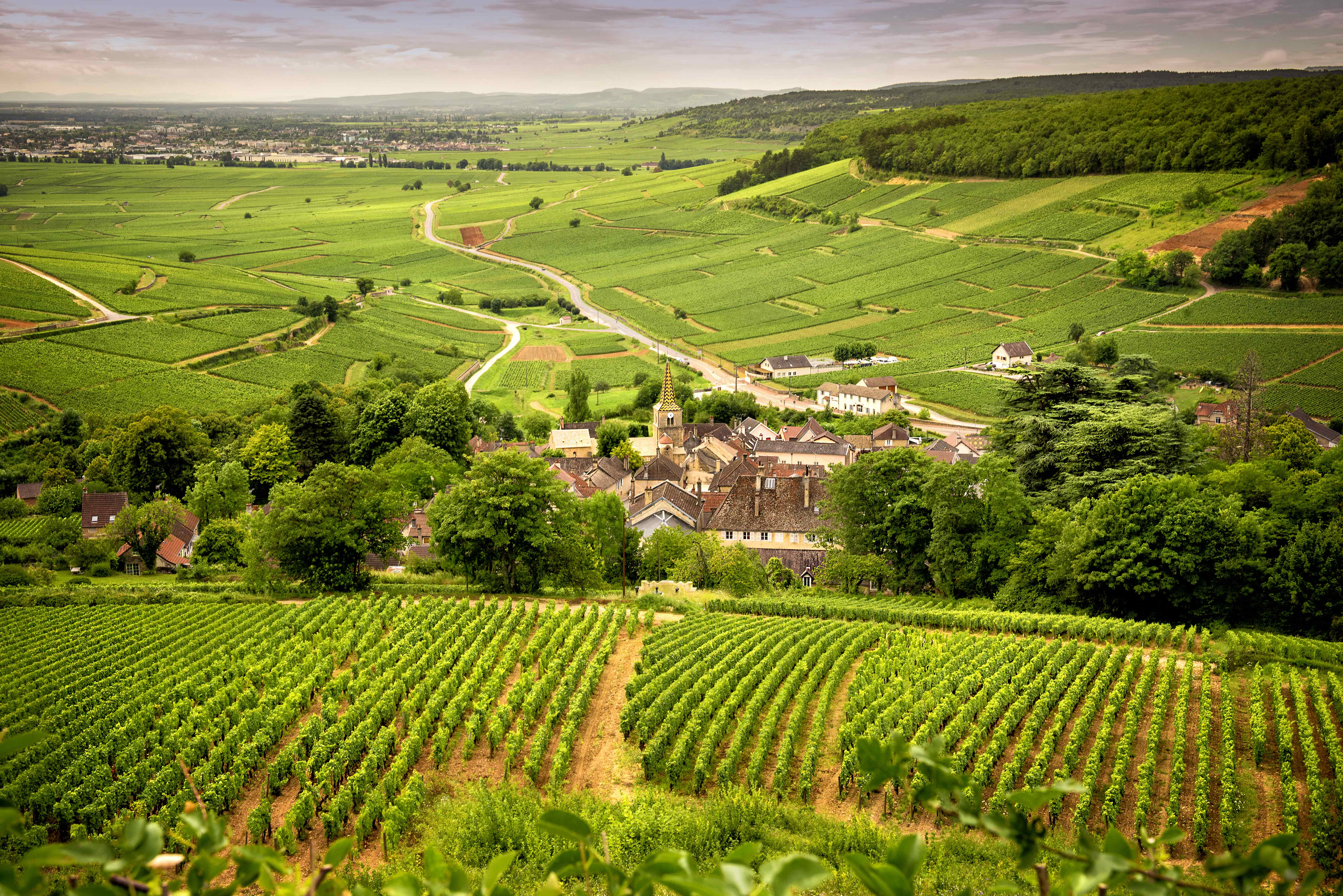 THE 2015 VINTAGE IN BURGUNDY REVISITED